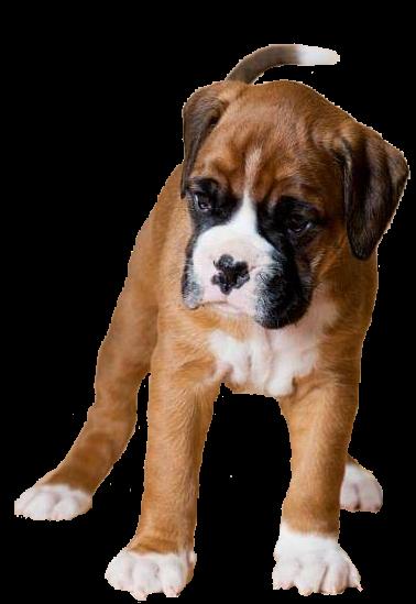 Abby als pup